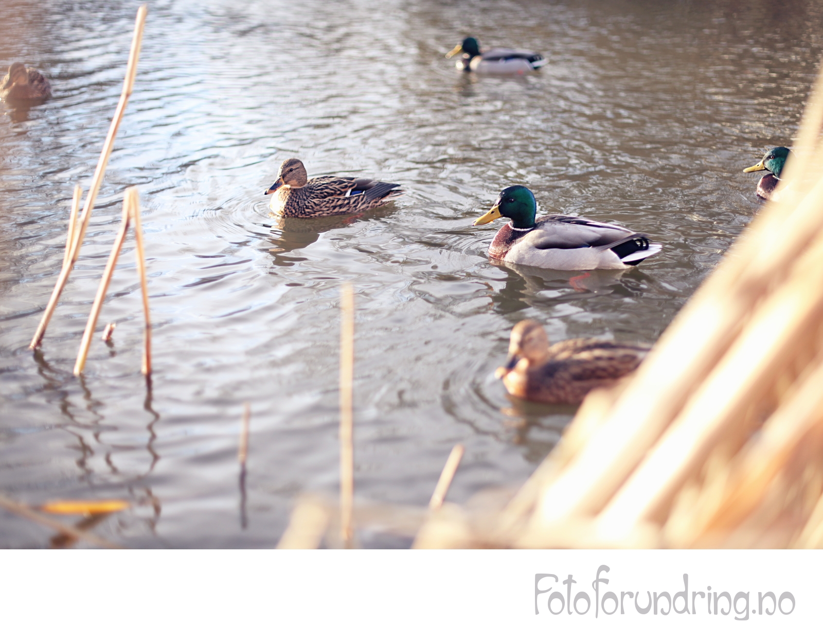 Tiril Hauan Photography: sitrende.net / tirilhauan.net / fotoforundring.no